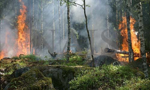 основные причины возникновения лесных пожаров